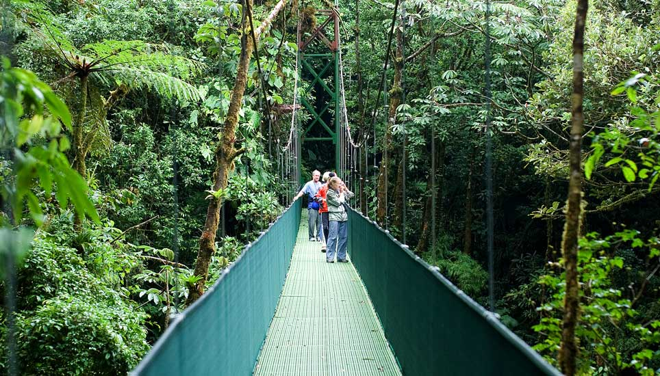 cloudforest hanging bridge