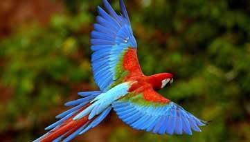 Macaw Costa Rica Osa Peninsula Holiday photo