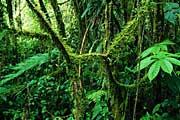 santa-elana-cloud-forest