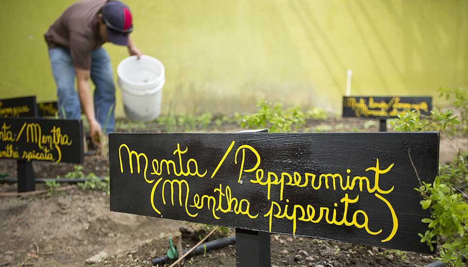 Buena Vista Lodge oragnic farming