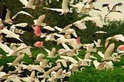 Cano-Negro-birds