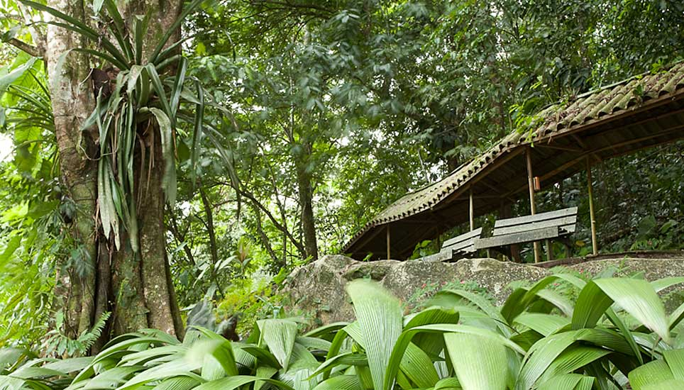 Selva Verde Lodge gardens