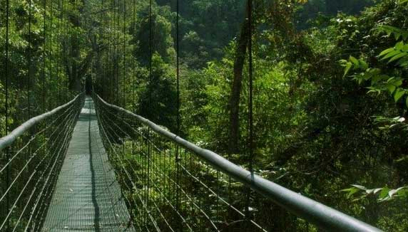 Hanging Bridge in a forest of Costa Rica