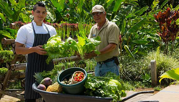 hotel staff selecting fresh vegetables from garden