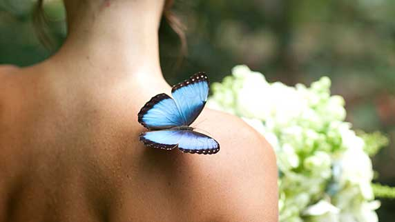 Si Como No butterfly on person back