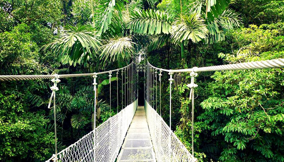 Arenal hanging bridge