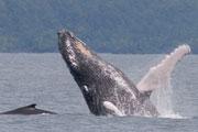 Wildlife-whale