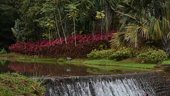 View of Macaw Lodge gardens and stream