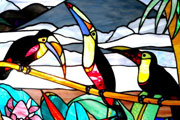 Wildlife-toucans