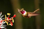 Wildlife-hbird-sstock