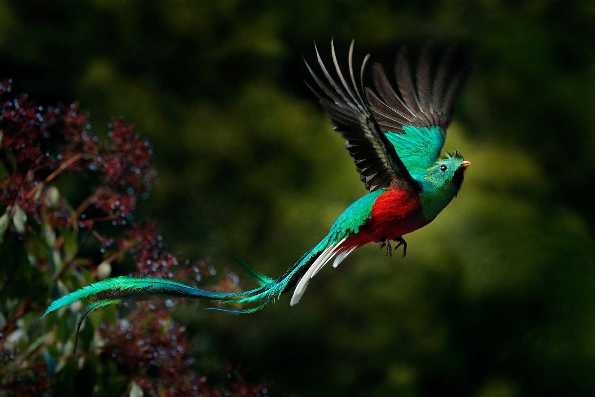 quetzal-B19