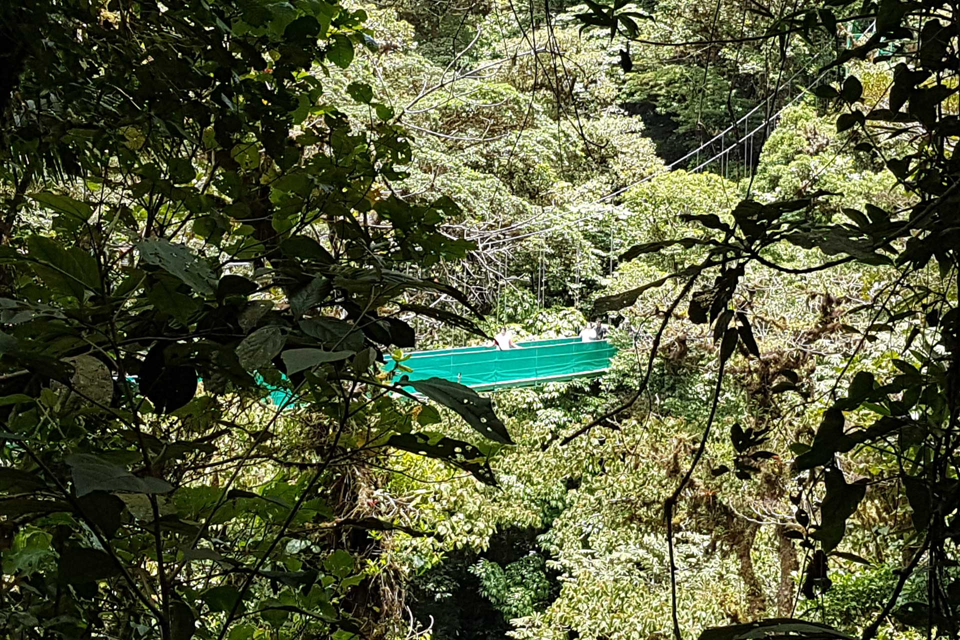 Monteverde-canopy-bridge