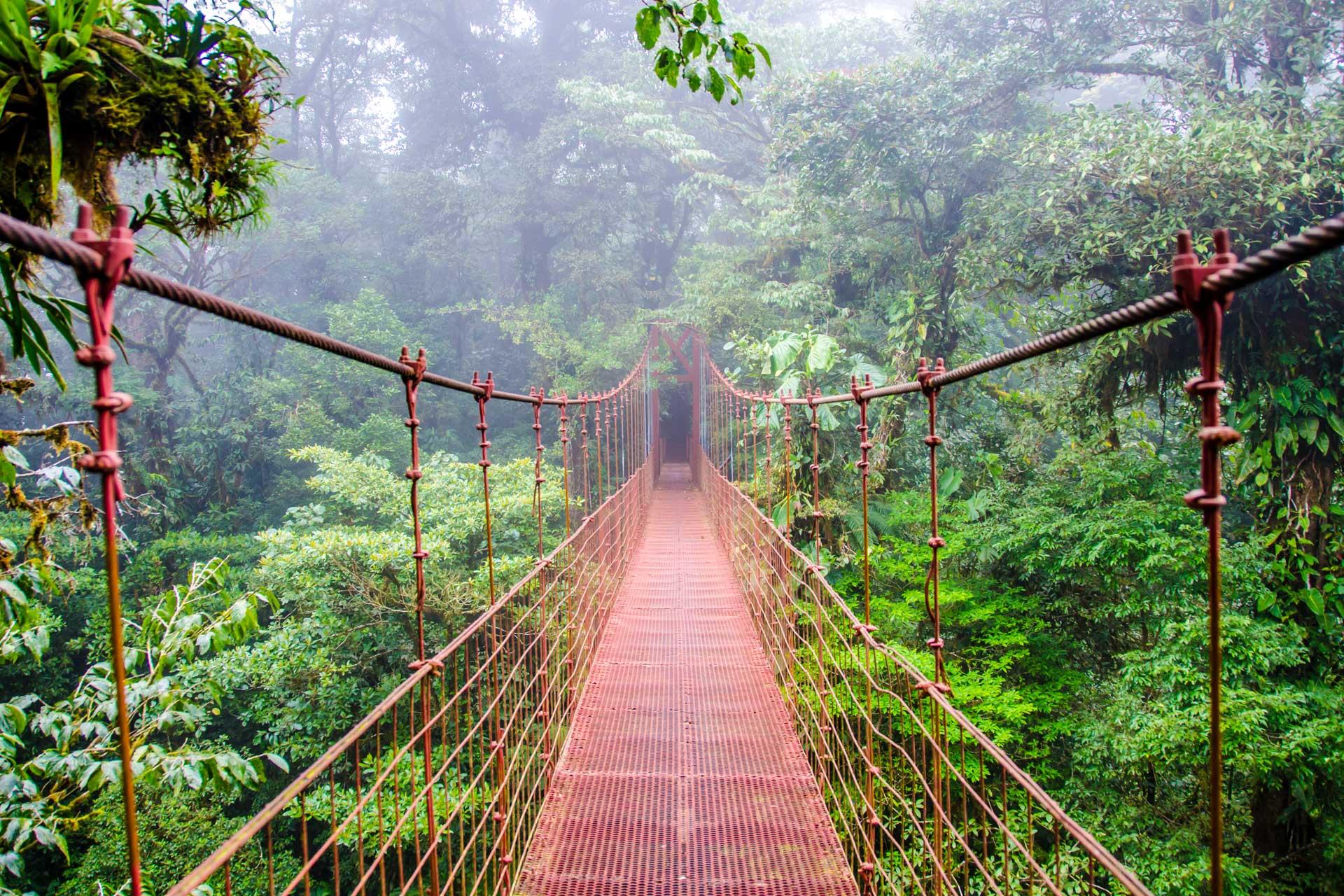hanging-bridge-B19